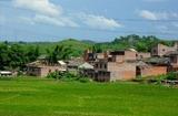 农村有哪些致富项目
