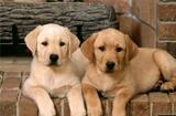 加盟圣宠宠物店