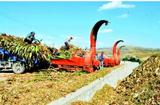 农村致富小项目