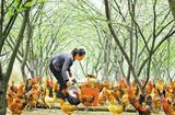 养殖业致富项目