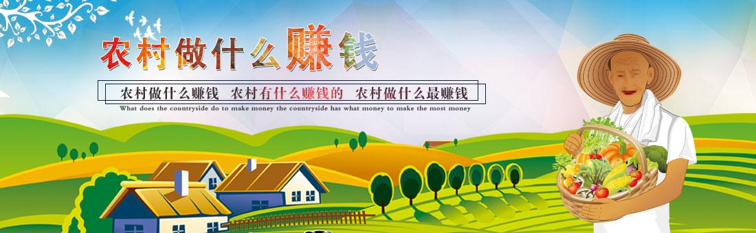 农村做什么赚钱