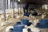农村养殖什么赚钱