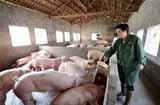开个养猪场要多少钱