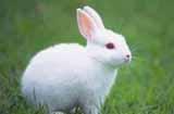 养殖兔子赚钱吗