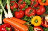 露天蔬菜种植有哪些品种