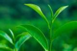 茶葉店加盟適合長久投資嗎
