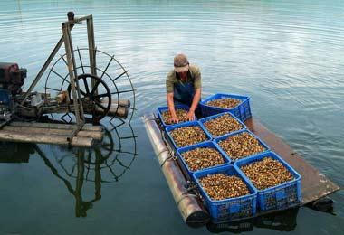 2018年安徽合肥第二届国际现代渔业暨渔业科技博览会