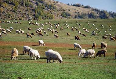 2018年中国贵州(贵阳)国际生态高效畜牧业交易会