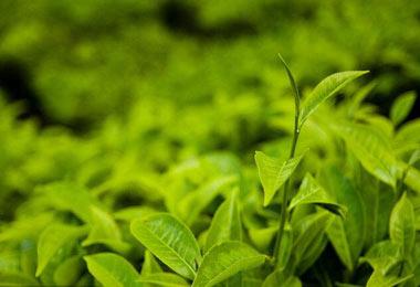 中国2018年湖南第10届茶业博览会
