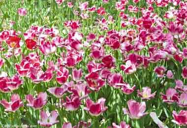 2018第十九届中国昆明国际花卉展