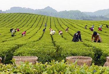 2019第10届秋季(廊坊)茶产业博览会