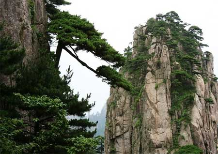 这标志着黄山风景区将能为参加上海世博会的中外游客