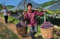 农民怎么做才能致富 农民要致富思维要改变