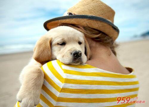 圣宠宠物店加盟|加盟圣宠宠物店如何做好服务?