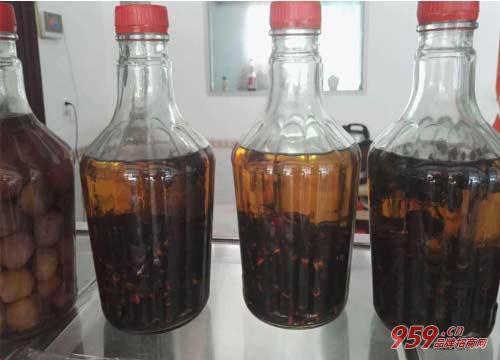 虎头蜂酒的功效与作用?虎头蜂酒有什么功效与禁忌?