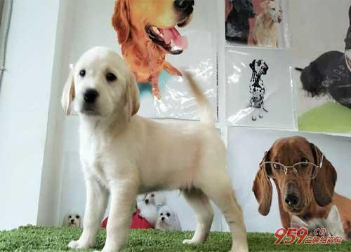 在上海开宠物店生意好做吗?开宠物店投资费用高吗?