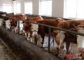 农村养殖什么最赚钱?农村养殖什么最有发展前景?