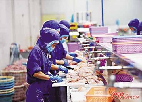 鱼老板也可白手起家到亿万资产 并把产品卖到国外去!