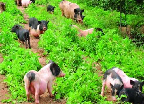 农村种什么赚钱?种植什么不愁销路?2018年最兴旺的养殖业!