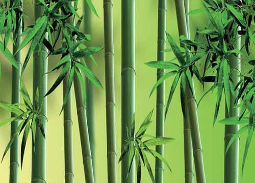 竹纤维材料