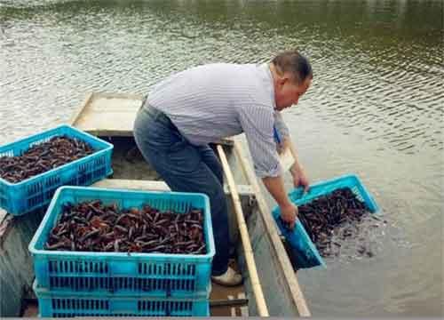 养殖小龙虾有风险吗?养殖小龙虾难在哪里?