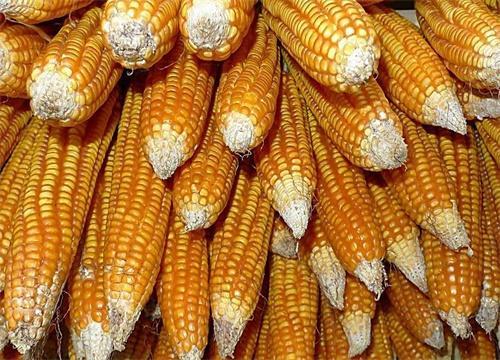 农产品加工项目