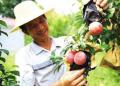 2019年在农村种植什么水果赚钱?精算3种农村种植致富项目