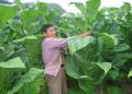 农村种植什么赚钱?这5个项目做得好