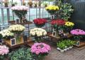 怎么開花店效果會比較好?