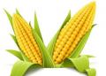 玉米深加工項目創業怎么樣 這幾個很有前景!
