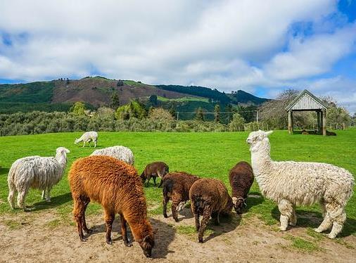 农村致富养殖项目有哪些?万元投资农村创业养殖项目