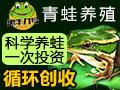 惠丰九号青蛙养殖 蛙源纯正现场培训