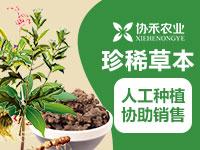 协禾农业药材种植