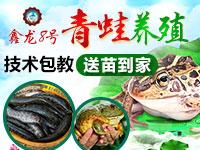 鑫龙8号青蛙养殖