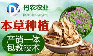 丹农农业白芨种植