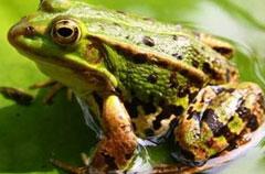 青蛙养殖 定时投喂 管理省心力